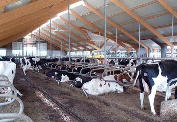 instalacoes gado de corte